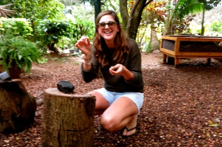A Macadamia Nut Farm! :D 2014